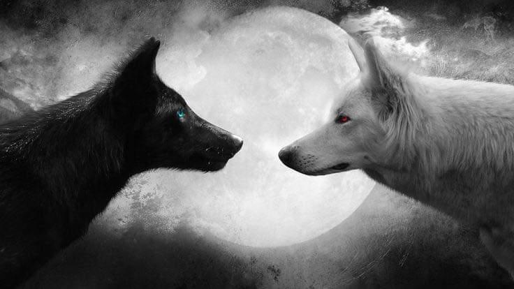 Les 2 Loups en toi